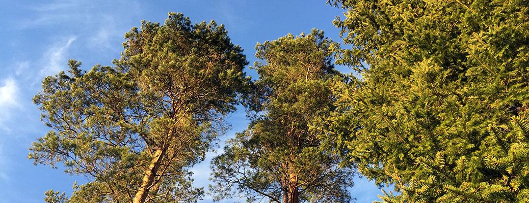 Trävaror med hög kvalitet|High quality customer adapted timber